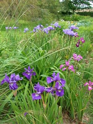 dry stream garden(May - June)