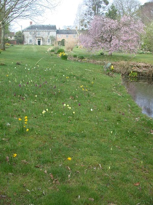 N.bulbocodium & fritillaries by pond (April)