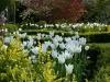 Parterre in Spring (April)