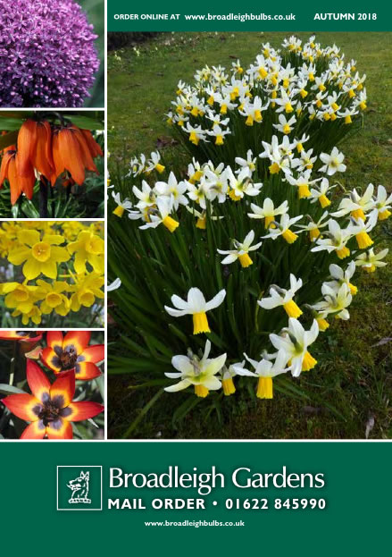 Broadleigh gardens uks leading seller of top quality small bulbs our main autumn catalogue for spring flowering bulbs will be posted in may but you can download a copy now or order online mightylinksfo